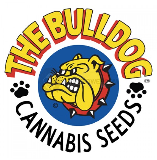 Bulldog Seeds Strawberry Ice 5ks