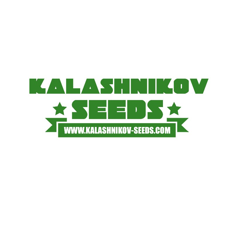 Kalashnikov Seeds White Critical Express Fast 3ks