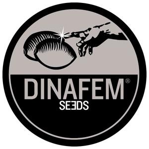 Dinafem Seeds Amnesia Kush 3ks (Feminizovaná )