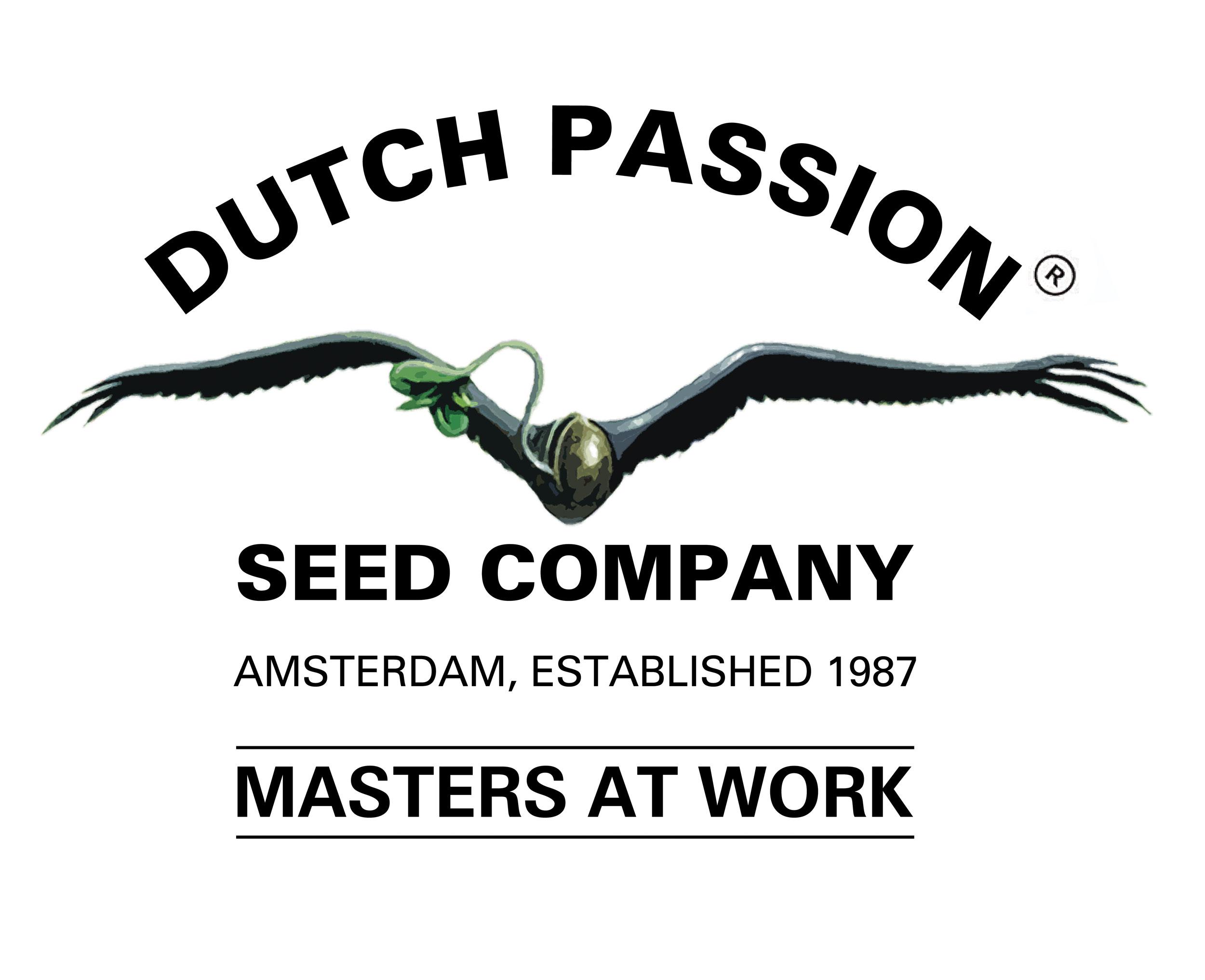 Dutch Passion Orange Bud 3ks (feminizovaná)