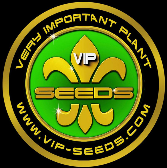 VIP seeds Chingis Khan 3ks