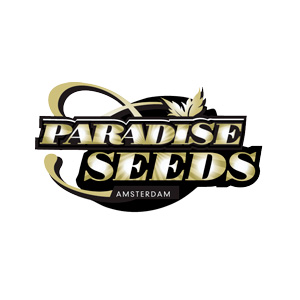 Paradise seeds Jacky White 5ks