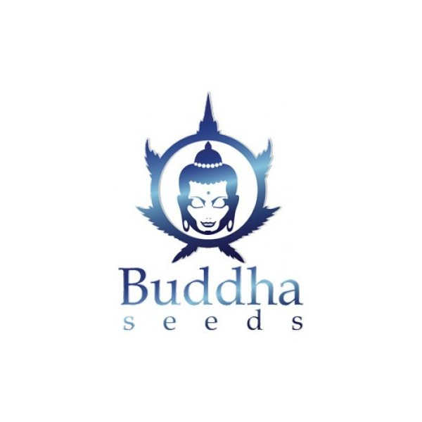 Buddha Seeds Assorted Auto 10ks