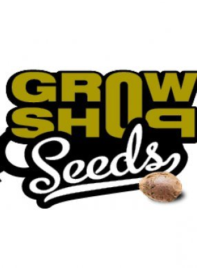 Growshop Seeds Black Domina 10ks