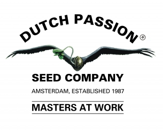 Dutch Passion Banana Blaze 100ks