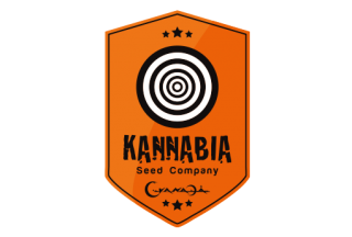 Kannabia Ginger Punch Auto 5ks